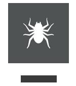 Effective Pest Control of Indoor Spiders in Mumbai