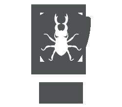 Termite Control Techniques