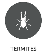 Termites pest control Company Mumbai