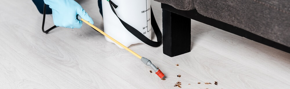 cockroach pest infestation